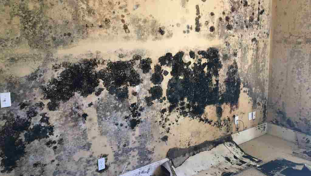 mold removal, mold remediation